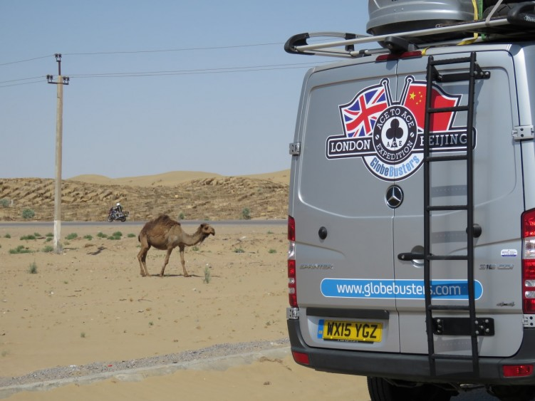 Camel ahead