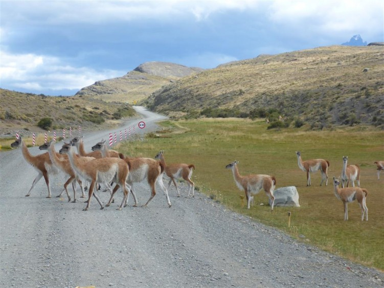 Typical hazards - guanaco